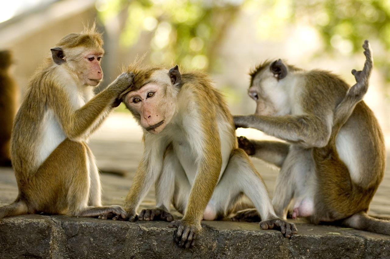 1280-144796796-three-monkeys.jpg