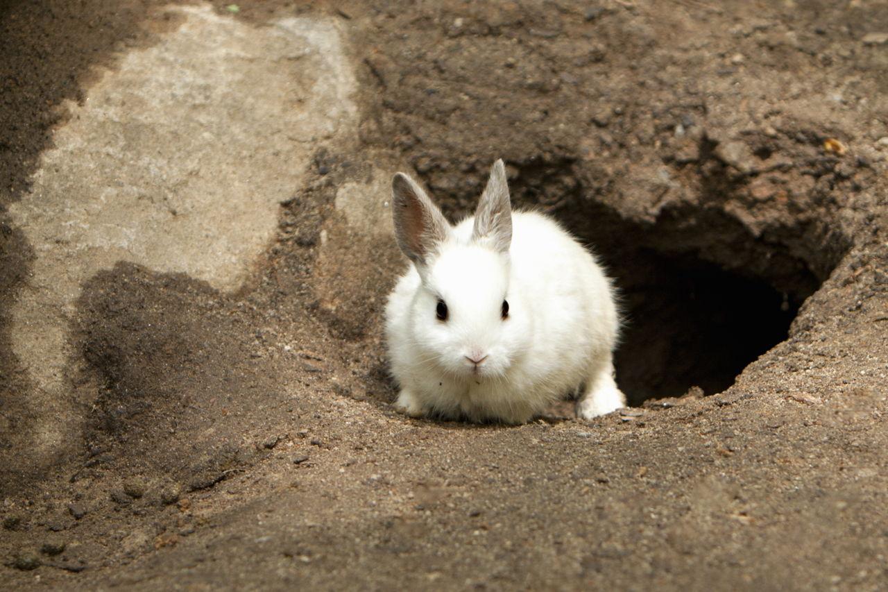 Rabbit Burrow Images Of Burrow Diagram Wire Diagram Images