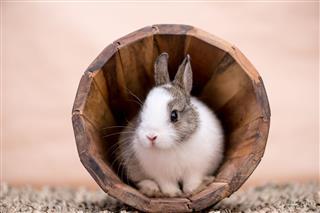 Bunny In Flower Pot