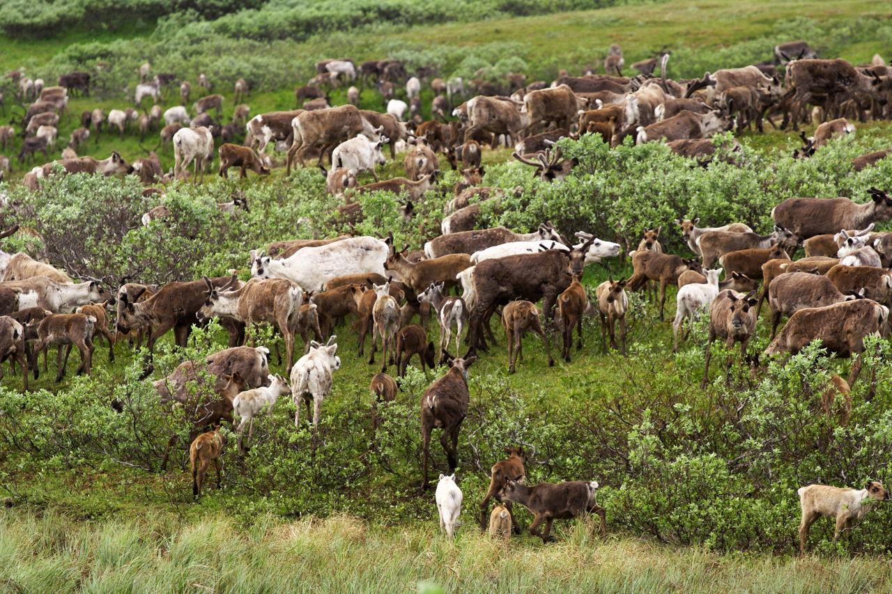 tundra biome articles
