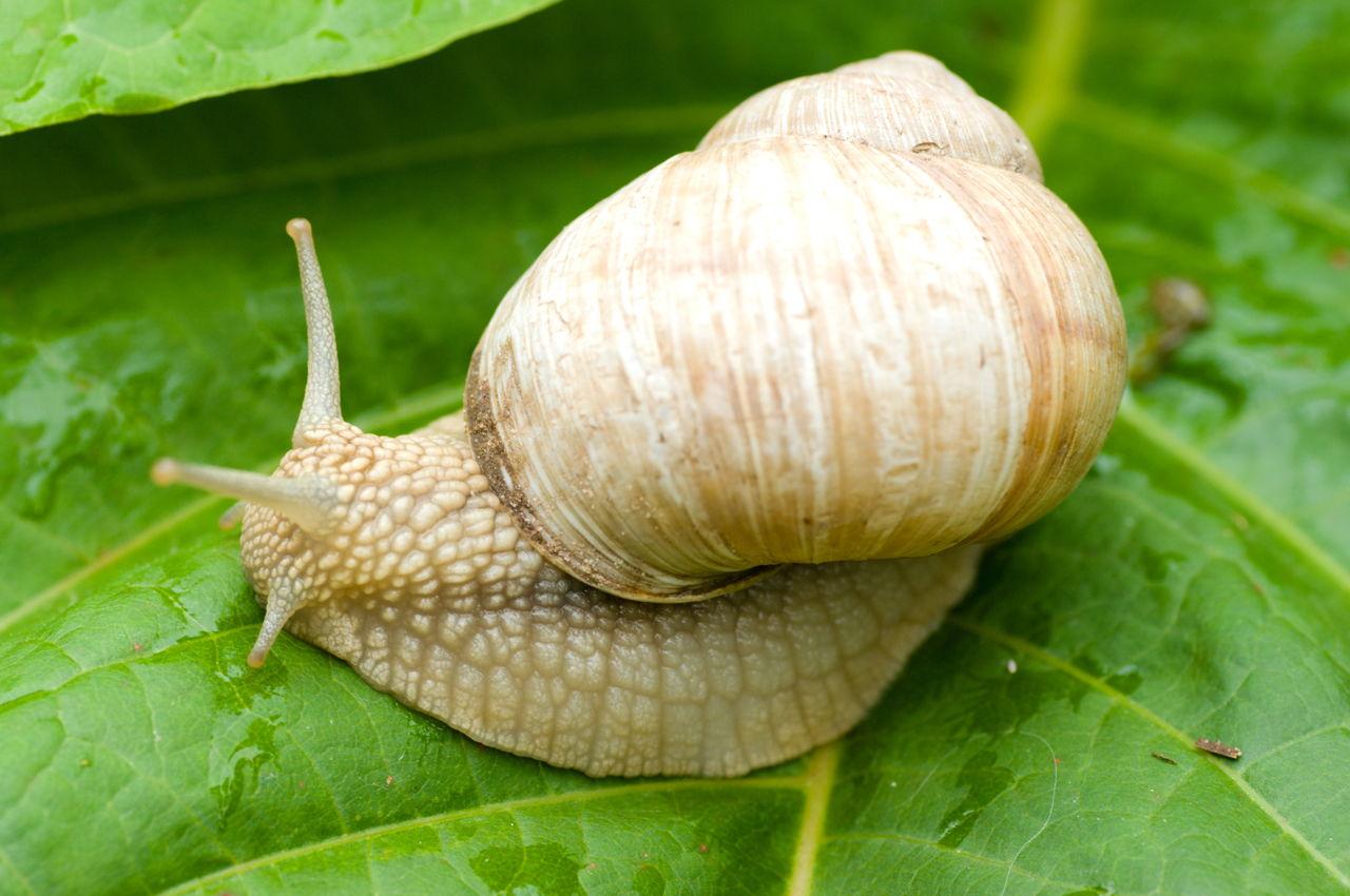 How Do Snails Eat Their Food
