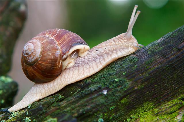 Snail On Moss Grown Tree