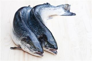 Raw Salmons