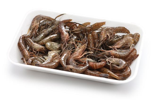 Japanese Freshwater Shrimp
