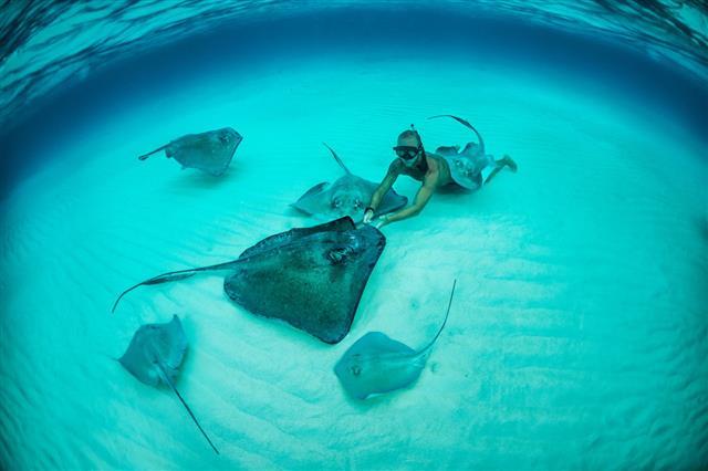 Snorkeler With Stingrays Underwater