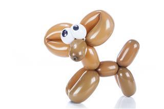 Balloon Dog Chihuahua