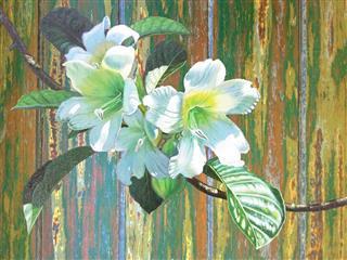 Herald Trumpet Flower