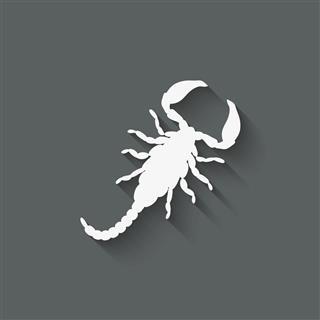 Scorpion Design Element