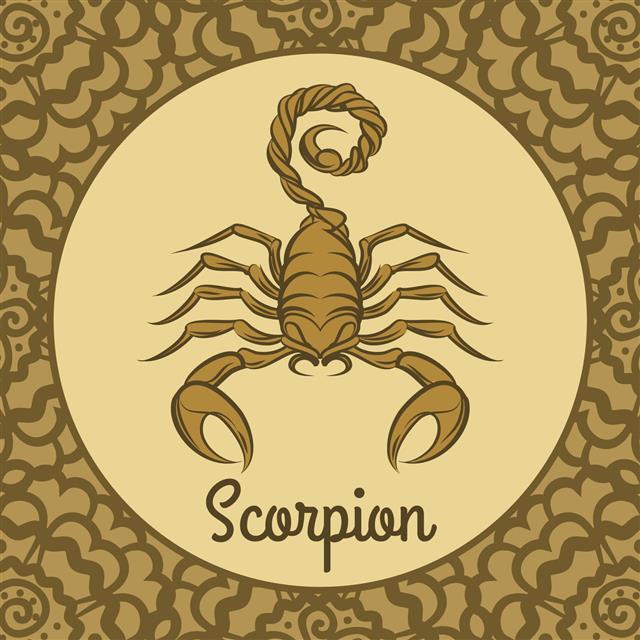 Scorpion Logo Icon