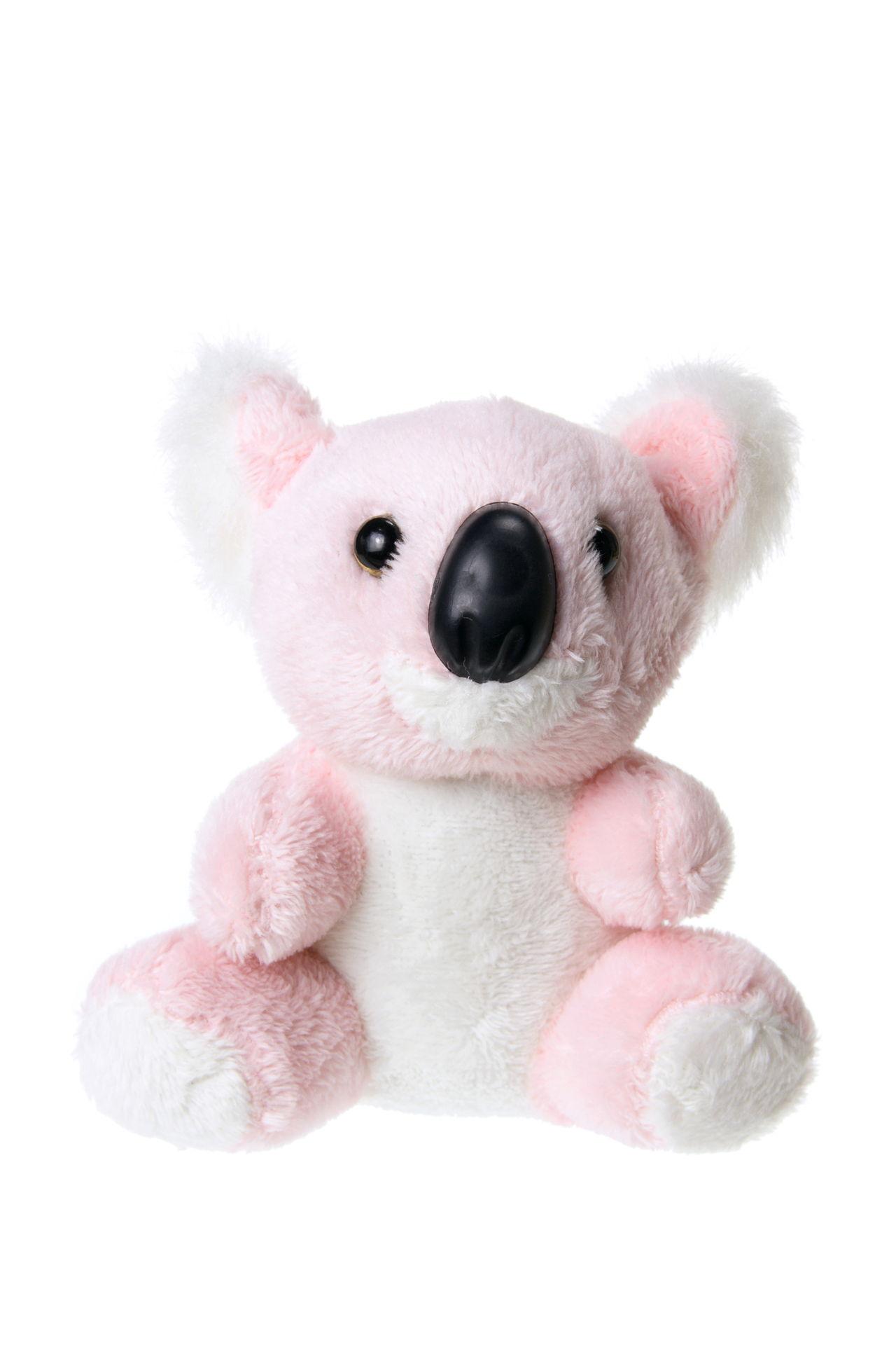 Koala Bears as Pets