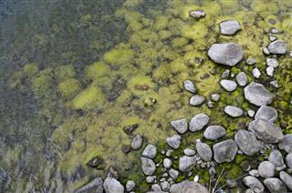 Coast With Algae