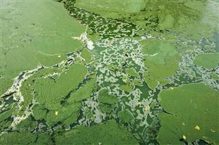 Environment Algae Background