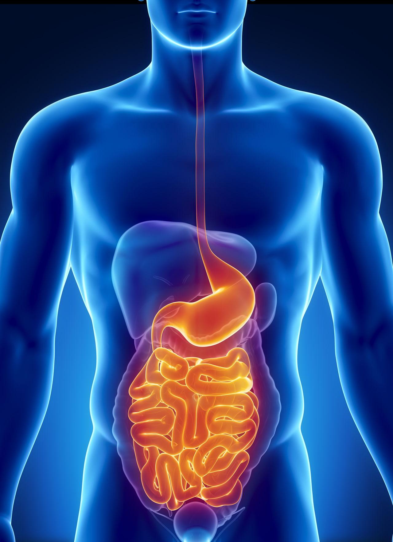Appendix Location Where Is Your Appendix