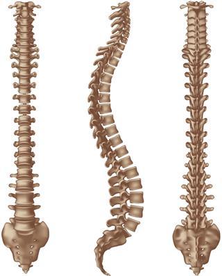 Human Spine Bones