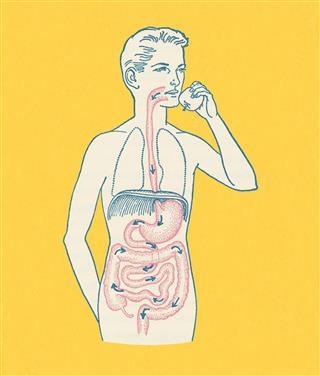 Boys Gastrointestinal Tract