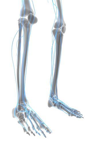 Feet Nervous System
