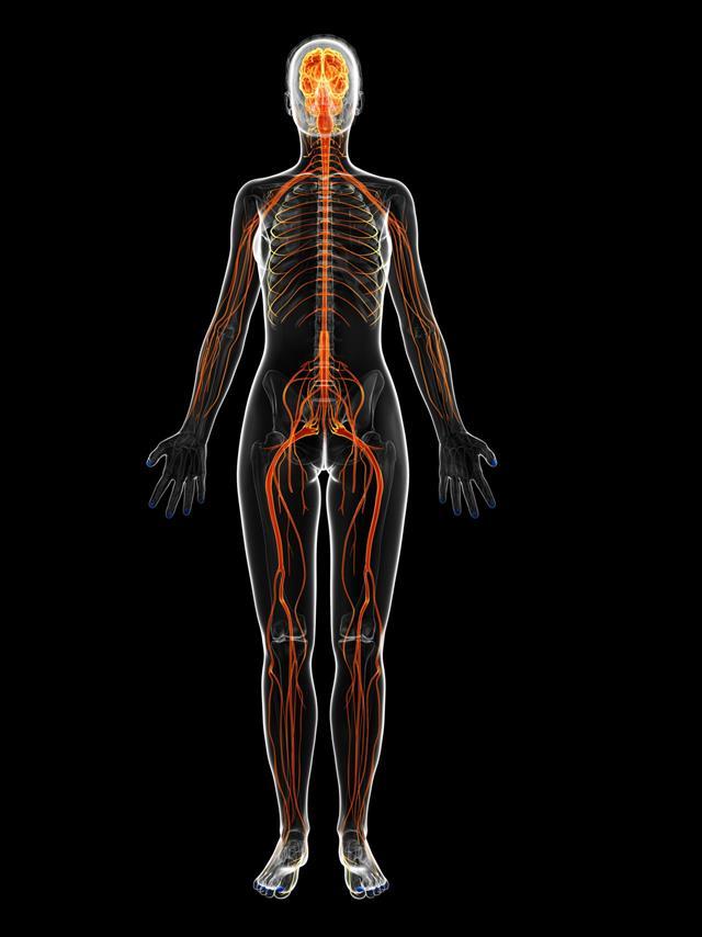 Female Nerves Full Body