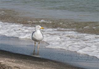 Seagulls On Beach Sand