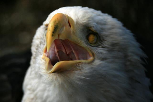 Bird mouth