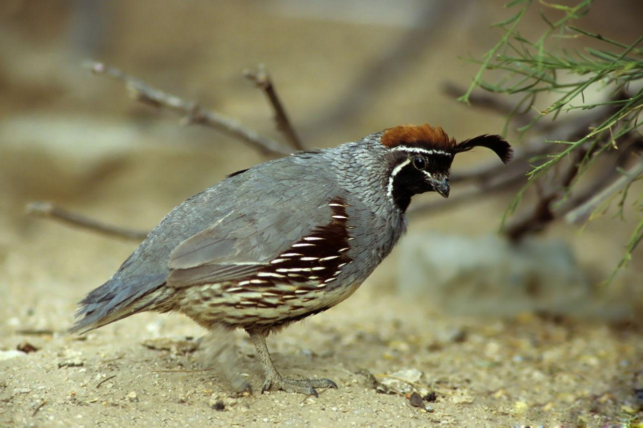Nature S Own Bird Food
