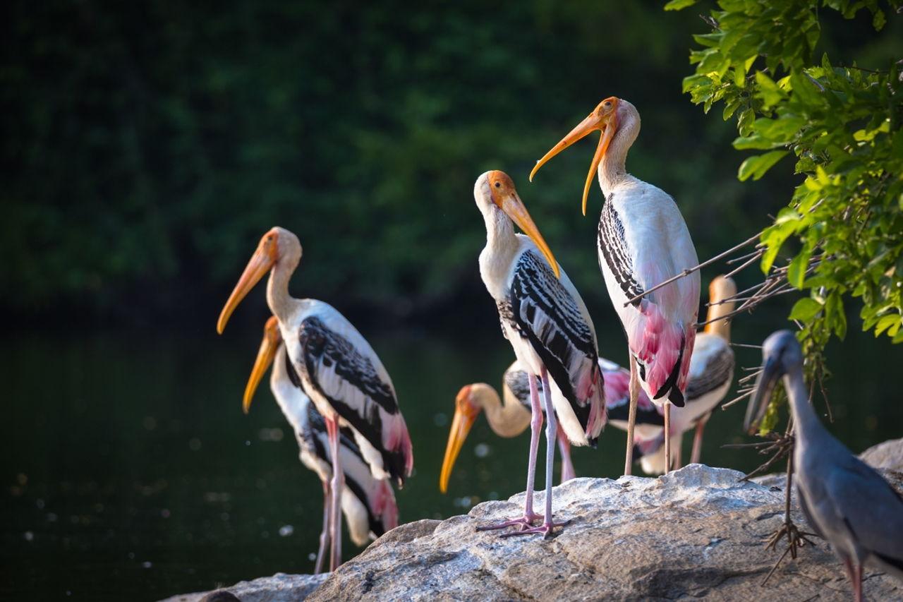 Here, We Reveal What a Crane (bird) Symbolizes