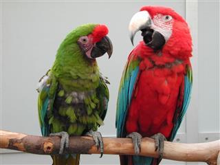 Parrots on a perch