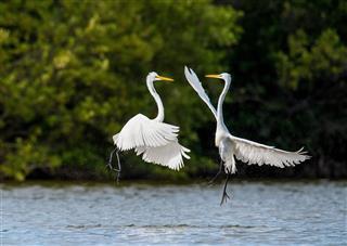 birds Dance