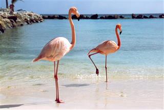 Flamingos Strand
