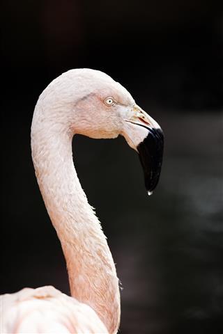 Flamingo. Color Image