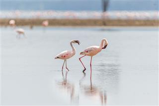 Zwei Flamingos