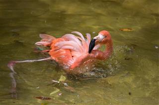 Tropical bird close-up