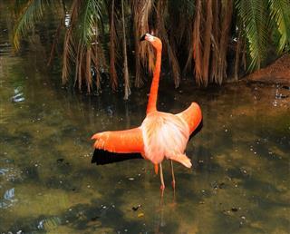 Pink Flamingo wings
