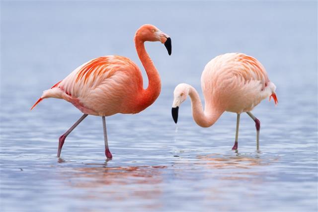 colorful flamingo