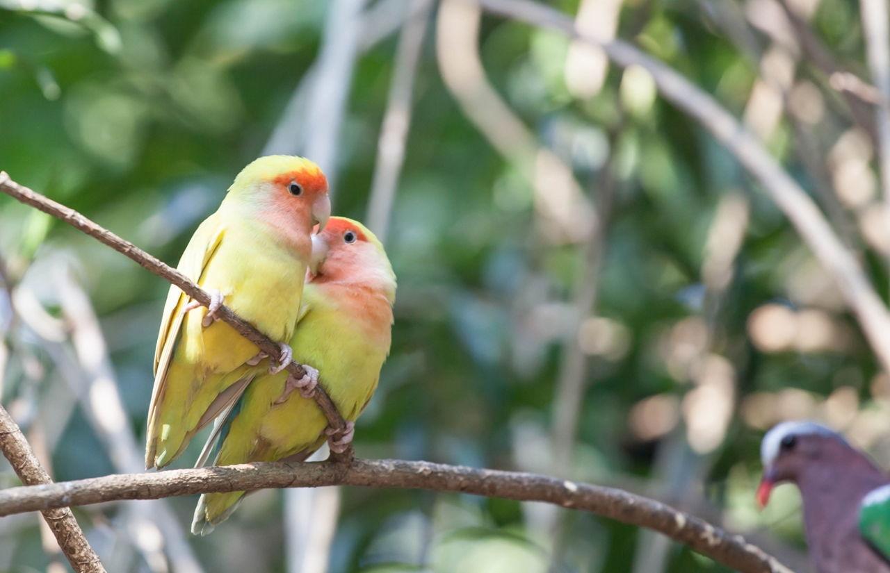 What Type Of Food Do Kiwi Birds Eat