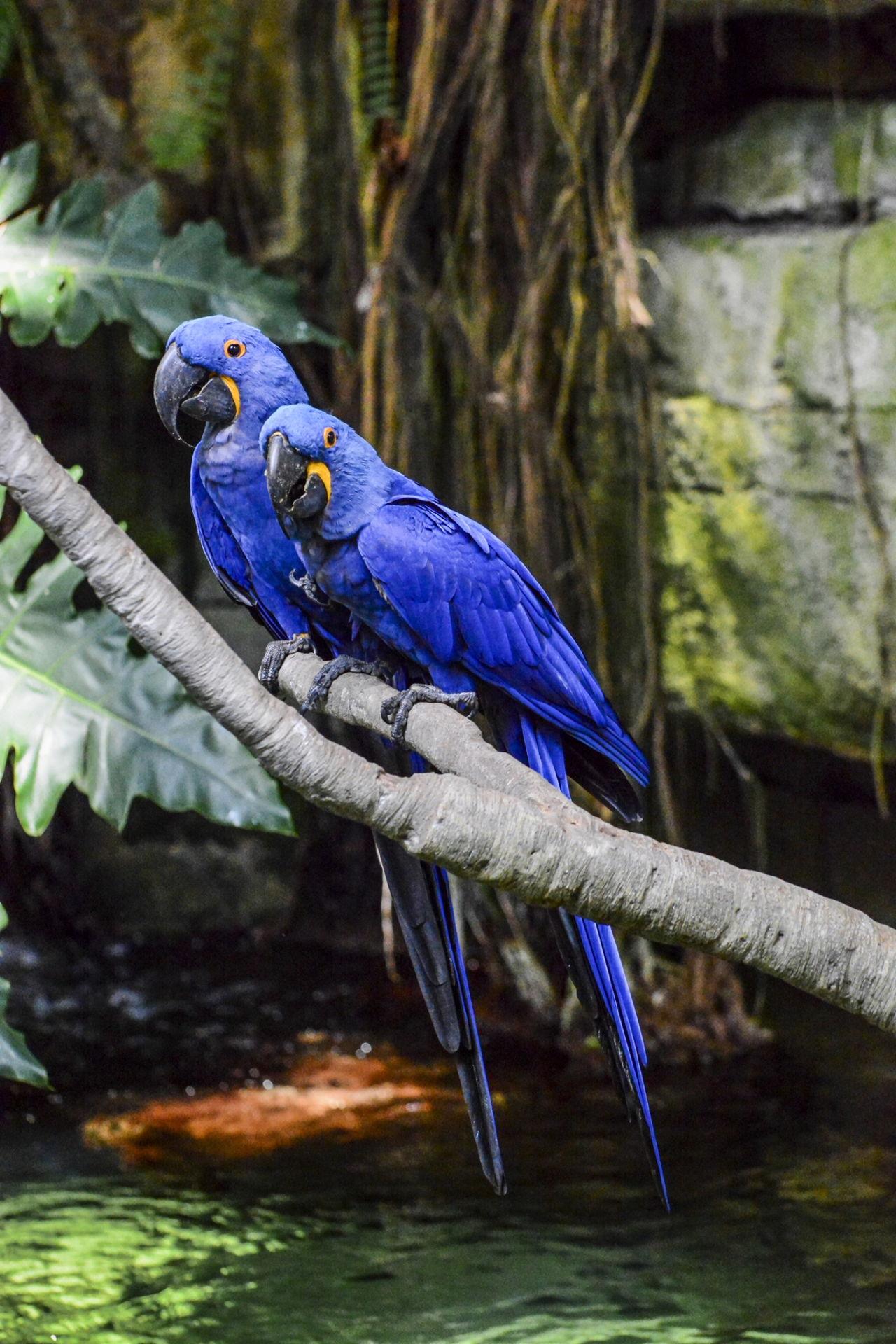 Unbelievably Splendiferous Facts About Parrots