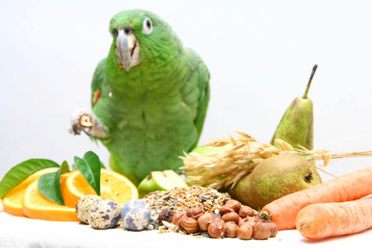 Birds On T Eat Hard Food