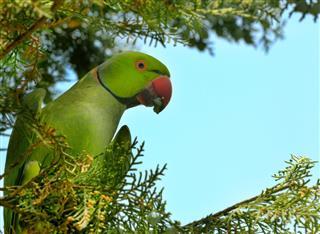 Parrot on tree