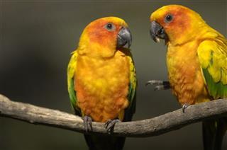 Love Birds talking