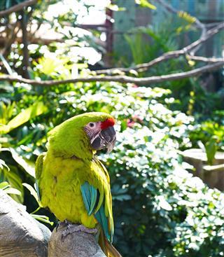 Hong Kong Ocean Park Parrot