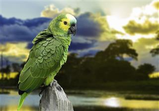 Green Parrot in Pantanal