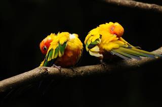 Grooming birds