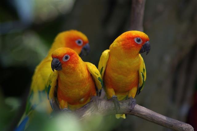 Perching Parrots