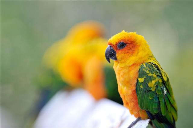 Parrot outdoor