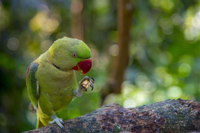 Macaw on tree
