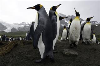 Penguin Territory War