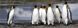 Leadership Among Penguins
