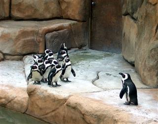 Penguin Bowling