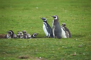 Penguin Creche