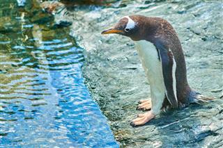 Penguin In Water Border