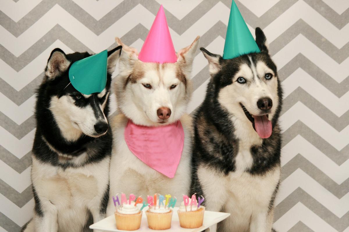 Dog Birthday Cake Recipes